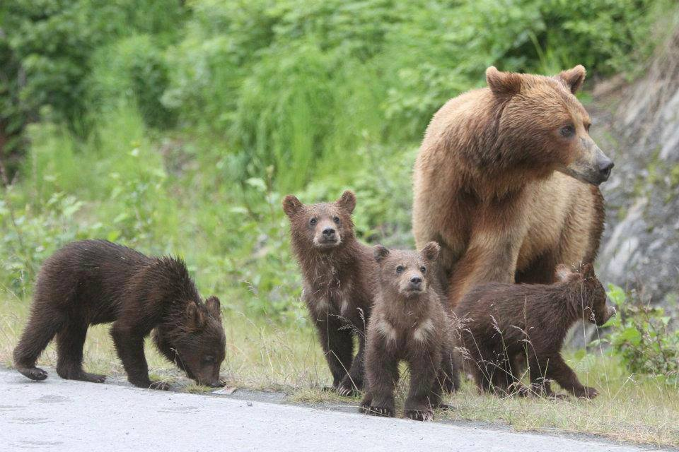 mum-n-cubs-4